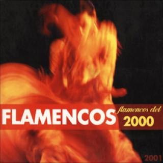 12488 Flamencos del 2000 / 2001